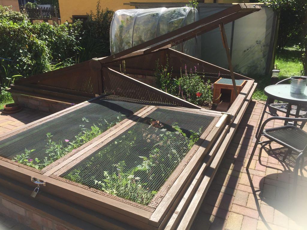 Schnell wachsen die Pflanzen an