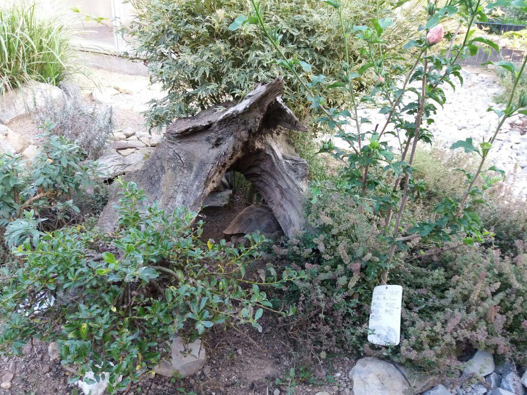 Ein Stück Baumstamm, tolles Versteck