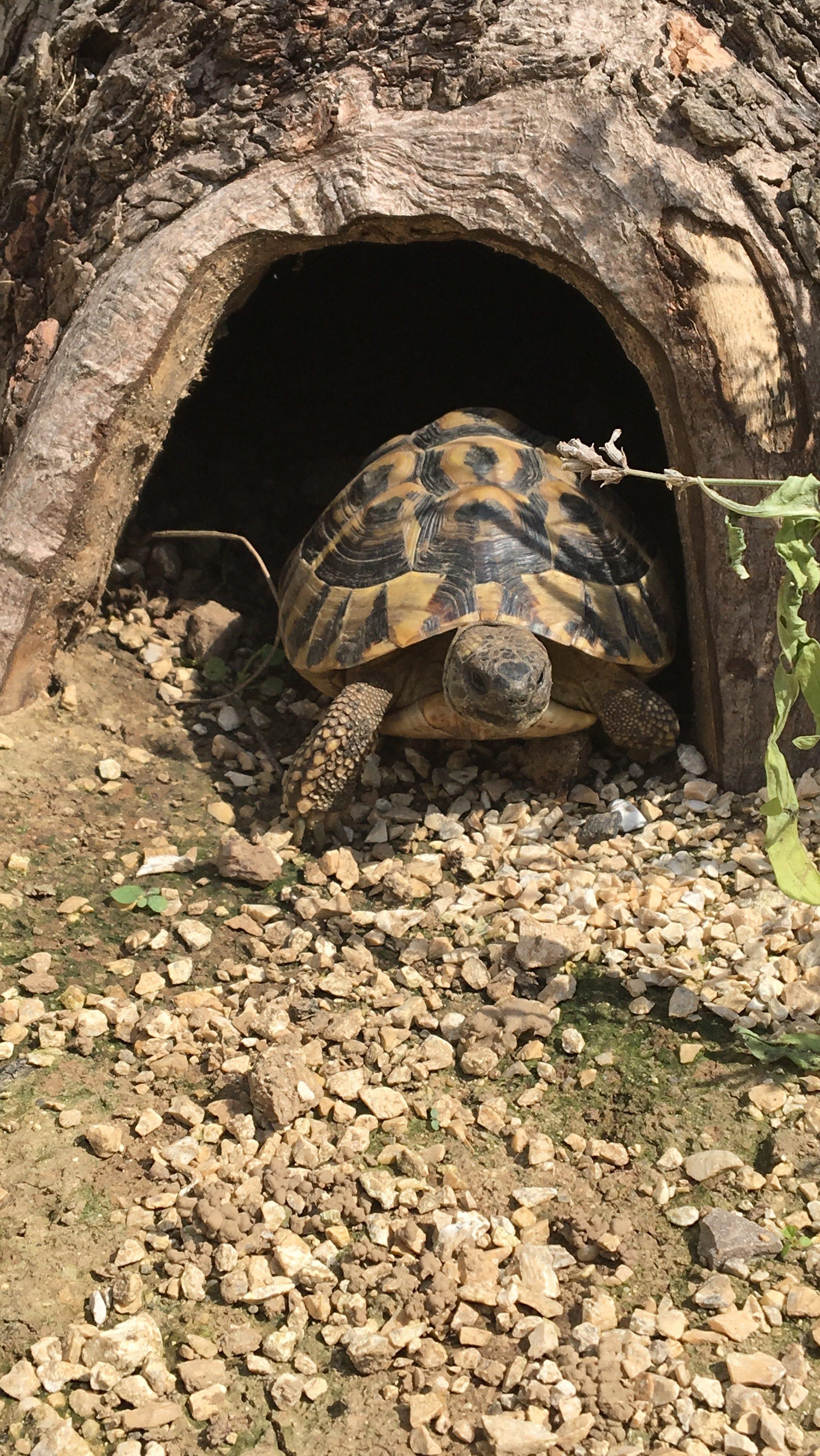 Tunnel geben den Tieren Schutz