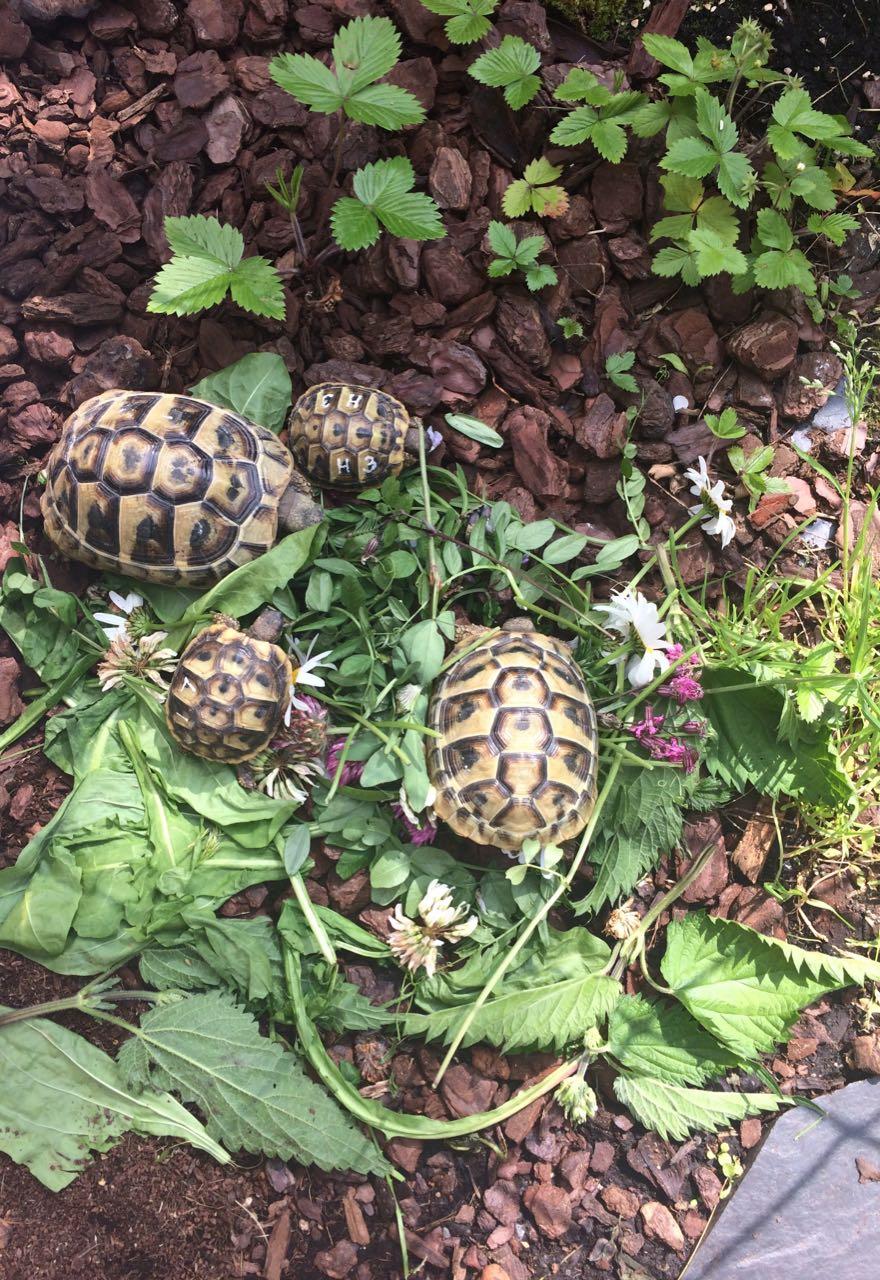 Schildkröten sind gerne in Gesellschaft
